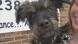 caught on tape puppy abandoned in junction city alley