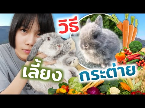 """วิธีเลือกซื้อกระต่าย """"ราคากระต่าย"""" ล้างคอกเต่า!!!?"""
