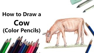 How to Draw a Cow with Color Pencils [Time Lapse]