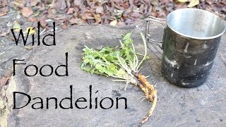 Wild Food - Dandelion. Dandelion Coffee and Nitsuke style root. Plus a Couple of Thank You's.