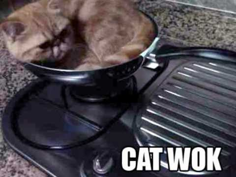 """Cats In The Cradle Or Kettle """"In My Chow Mein""""  Funny Parody Song"""