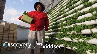 Growing Roots - This Farmer Is Taking Root On Your Rooftops // Discovery on Viddsee