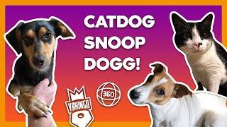 Catdog Snoop Dogg КОТОПЕС ПЕС • Животный АСМР в 360 • Animal Asmr 360 Vr Video Vrkings