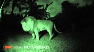 panasonic wearable camera hx a1   0 lux night mode   at mogo zoo