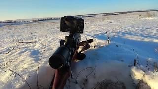 Охота на Лису с Манком в Январе