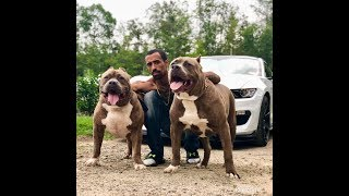 THE HULK LIFE: the ultimate debate!! is it ORANGE or YELLOW!!!! are dogs are color blind!