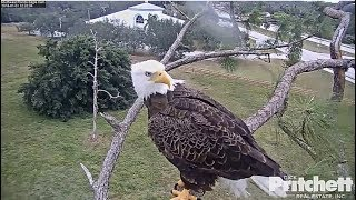 SWFL Eagles~Harriet Goes on High Alert_1.1.18 thumbnail