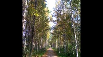 Relaxing forest moods- Hetki metsässä