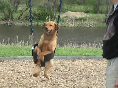 This Dog Loves To Swing
