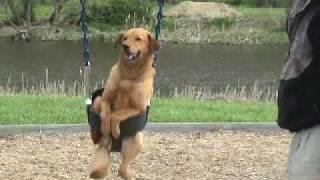 Dog In Swing - Dog On Swing - Dogs Love Swings. Playground.