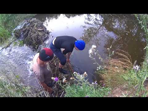 Вопрос: Зачем бобры устраивают на реках плотины?