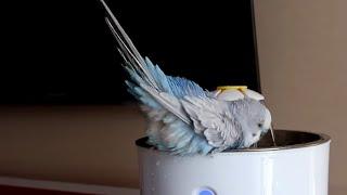 Бассейн для попугая с Aliexpress    поилка для собак и котиков