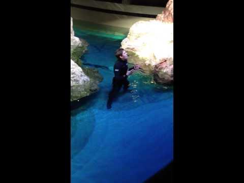 NEAq Penguin Tray Talk - January 01, 2014