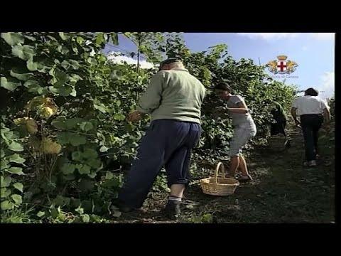 Ciclo produttivo del vino a Missano in Val Petronio