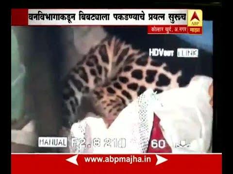 अहमदनगर : कोल्हार खुर्द गावातील घरात बिबट्याचा मुक्काम