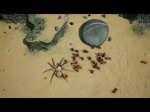 Empires of the Undergrowth: Beach Wolf Spider vs Wood Ants
