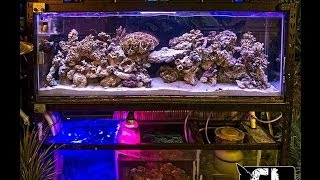 Greenleafs 150 Gallon Custom Reef Tank!