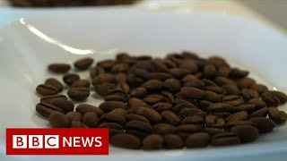 What does a $75 cup of coffee taste like? - BBC News