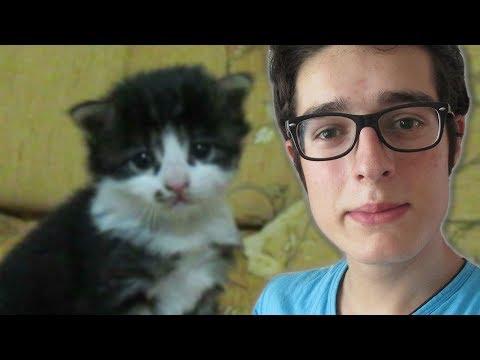 GECE SOKAKTA YAVRU KEDİ BULDUM !! (Yavru Kedi Videoları)