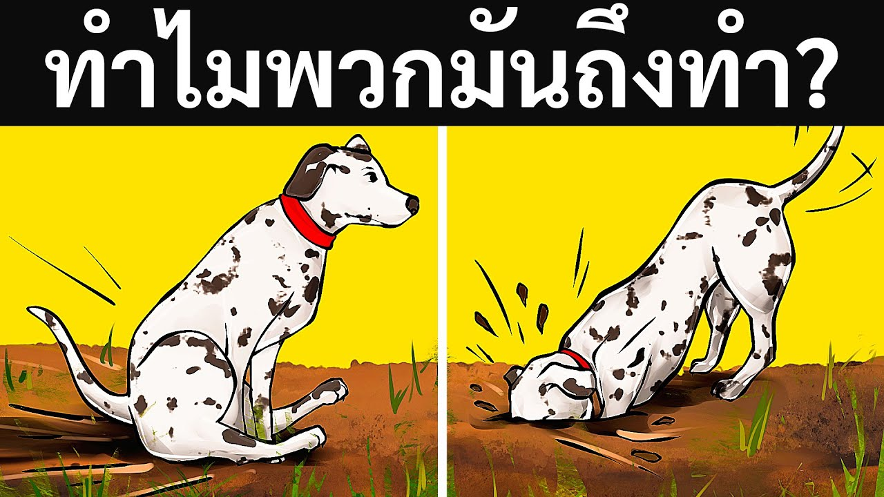 ความหมายที่แท้จริงเกี่ยวกับพฤติกรรมแปลกๆ ของสุนัข 19 ข้อ