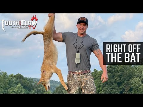 Right Off The Bat – Coyote Hunting