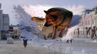 Новый год   год собаки