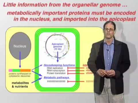 David Roos (U Penn) Part 2: The apicomplexan plastid