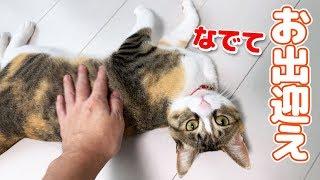 転がってお出迎えしてくれるビビリ猫、今日のお出迎えはこんな感じでした