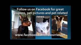 No Worries Pet Sitting - Easton, Allentown, Nazareth, Bethlehem, Coopersburg, Whitehall