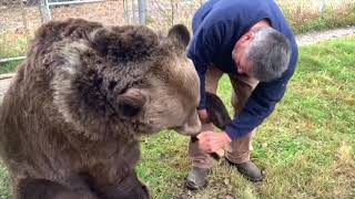 When your 900 lb bear needs to be brushed..