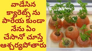 How to grow carrots from carrot tops at home in Telugu with Tips