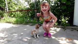 Собака и ребенок видео Собака видео Детское видео про собаку Funny Video for kids Nursery Rhymes