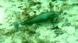 Яркое видео Мальдивы. Красивые рыбки приплывают прямо к бунгало. Кормим рыбок.(Мальдивы. Красивые рыбки приплывают прямо к бунгало. Кормим рыбок. Бунгало стоит на сваях над водой. Смотриш..., 2015-04-05T09:46:31.000Z)