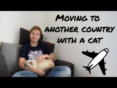 Traveling In A Plane With A Cat | From Quebec To France | Crazydivers