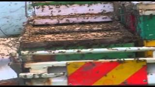African Beekeepers modern beekeeping