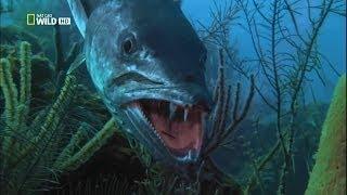 Самые опасные животные из морских глубин - Фильм документальный
