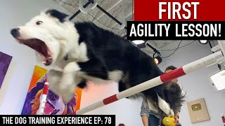 My Dog's FIRST Agility Lesson!
