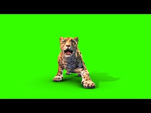 Green Screen Jaguar Feline Animals Run Attack - Footage PixelBoom CG
