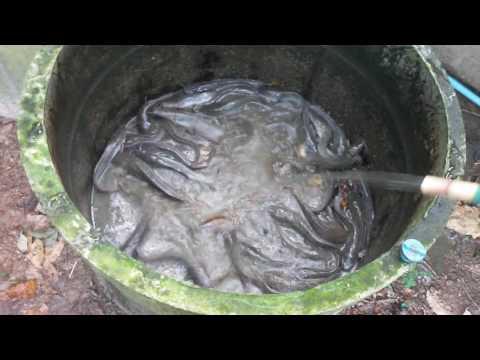 เลี้ยงปลาดุก  ในท่อปูนซีเมนต์