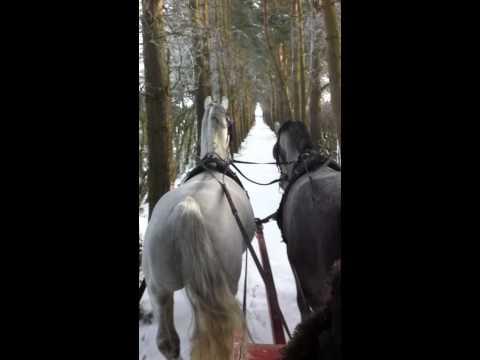 sleigh drive