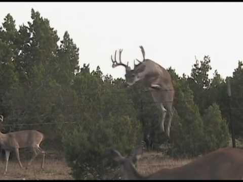 Deer Jump 12 Point Whitetail YouTube
