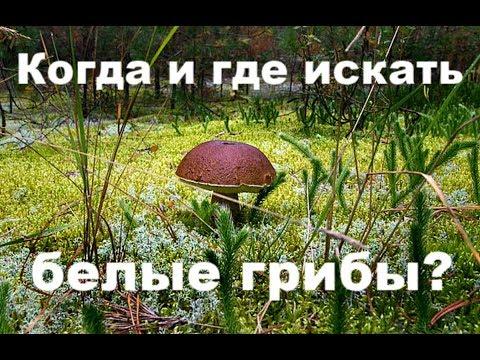 Вопрос: Какие самые распространенные грибы в сосновом лесу?