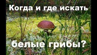 Как найти грибное место в лесу?