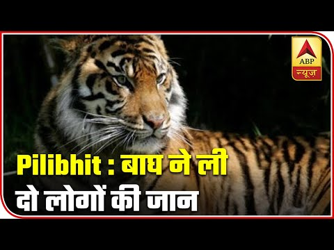 Tiger Kills Two