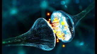 Decoding Human's Brain - Full Documentary HD