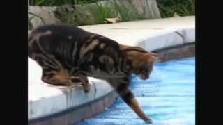 Gatos Comédia / Vídeos Engraçados de Gatos