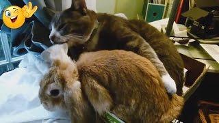 Кот и кролик и кое что еще
