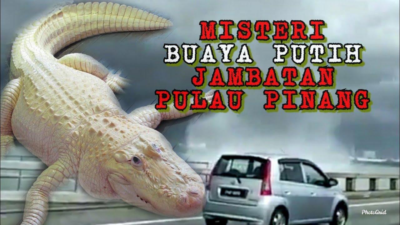 Download Kisah Misteri Buaya Putih Di Jambatan Pulau Pinang