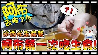 【Bonnie】阿布在哪裡?! - 貓咪的頂級生食餐│阿布的生食初體驗 ! !