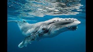 Ara Geçiş Fosilleri ve Türleri: Balinalar